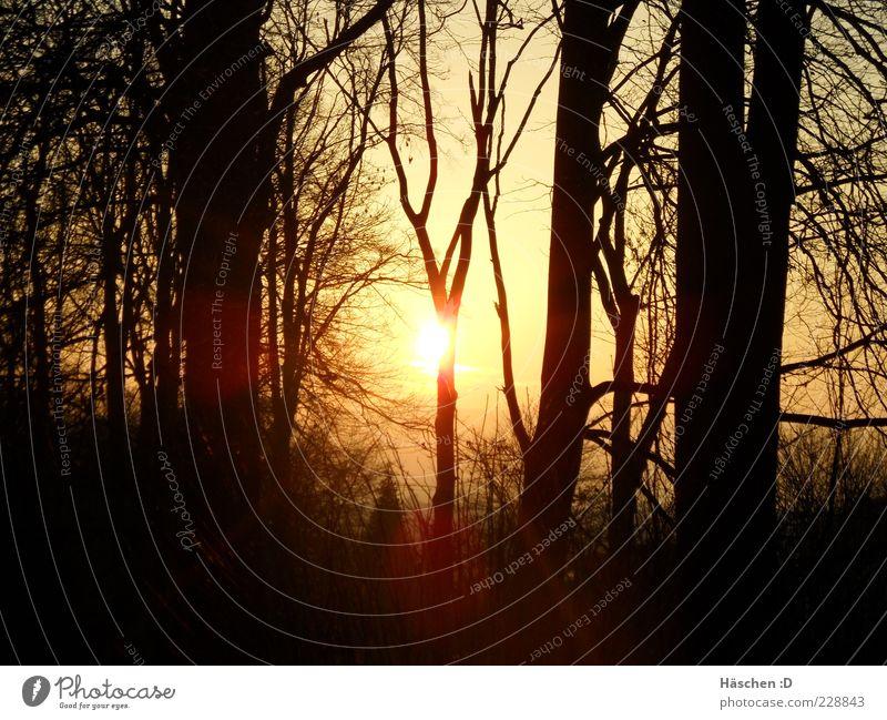 Letzter Sonnenstrahl Natur Luft Himmel Sonnenaufgang Sonnenuntergang Sonnenlicht Schönes Wetter Baum Wald natürlich Lichtstrahl Farbfoto Außenaufnahme