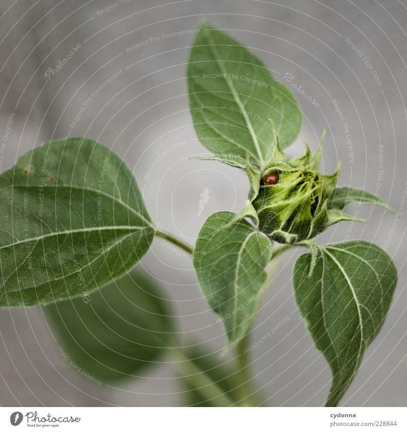 Marienkäferversteck Umwelt Natur Pflanze Blatt Blüte einzigartig entdecken Leben Pause ruhig schön Schutz Sicherheit Umweltschutz Versteck Größenunterschied