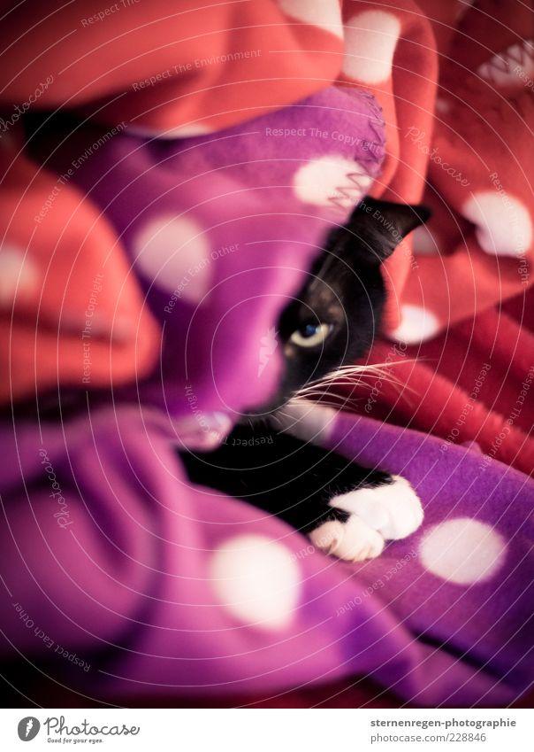 Kätzchen mit Pünktchen weiß schön rot schwarz Tier Gefühle Katze Wärme Zufriedenheit liegen Sicherheit niedlich weich beobachten Warmherzigkeit Neugier