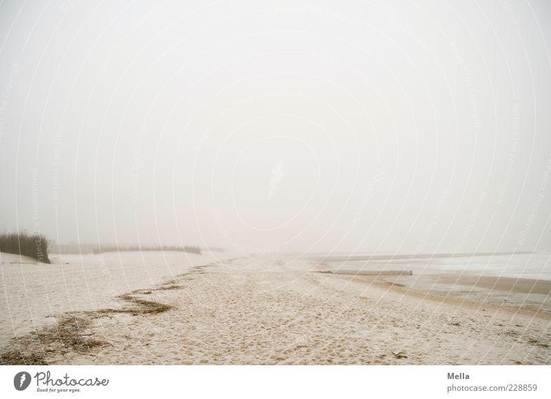 Gehen Natur Meer Strand ruhig Einsamkeit Ferne Umwelt Landschaft grau Sand Küste Stimmung hell Nebel natürlich Klima