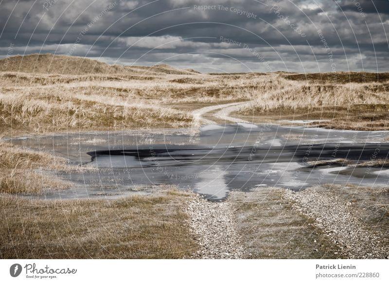 end of days Himmel Natur Pflanze Winter Wolken Ferne Wiese dunkel kalt Umwelt Landschaft grau Wege & Pfade Stein Traurigkeit Luft