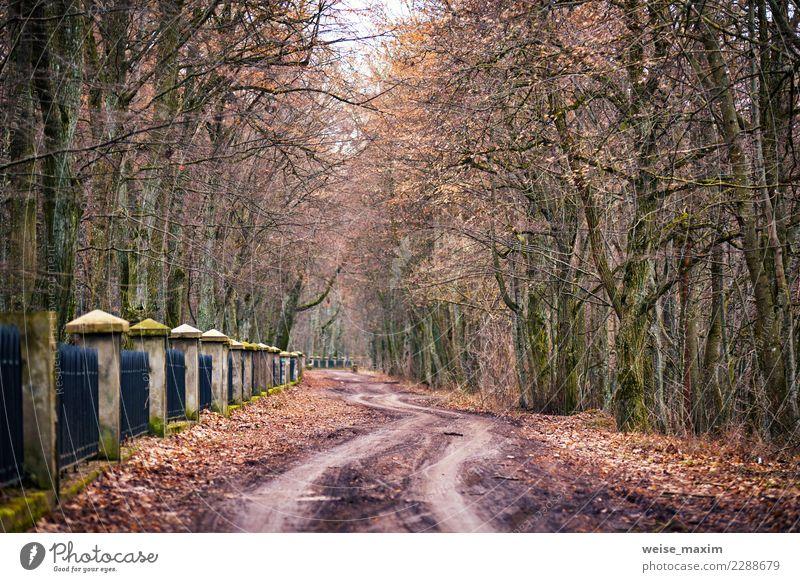Herbstlandschaft mit Dunst und Schotterweg im alten Park schön Leben Ferien & Urlaub & Reisen Tourismus Ausflug Ferne Freiheit Sightseeing Städtereise Winter