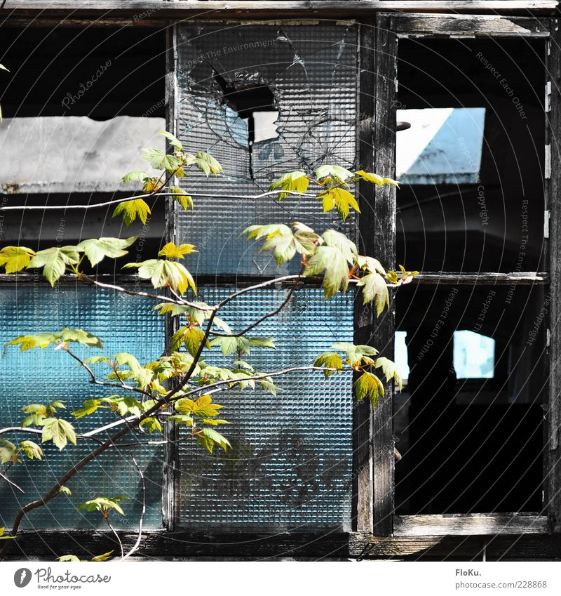 Was übrig bleibt Umwelt Pflanze Blatt Grünpflanze Wildpflanze Menschenleer Industrieanlage Fabrik alt dreckig kaputt blau grün schwarz Zukunftsangst Verfall