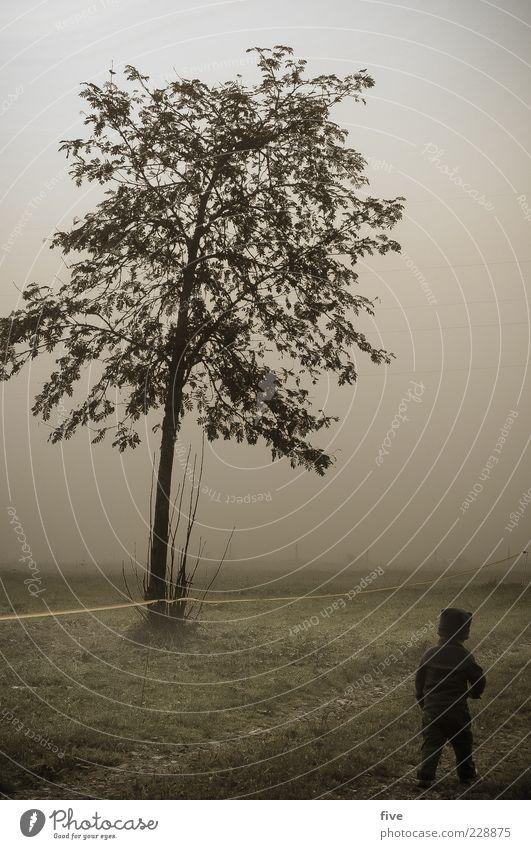 draufgänger Mensch Kind Himmel Natur Baum Pflanze Freude Blatt Wolken Herbst Wiese Leben Spielen Landschaft Glück Wege & Pfade