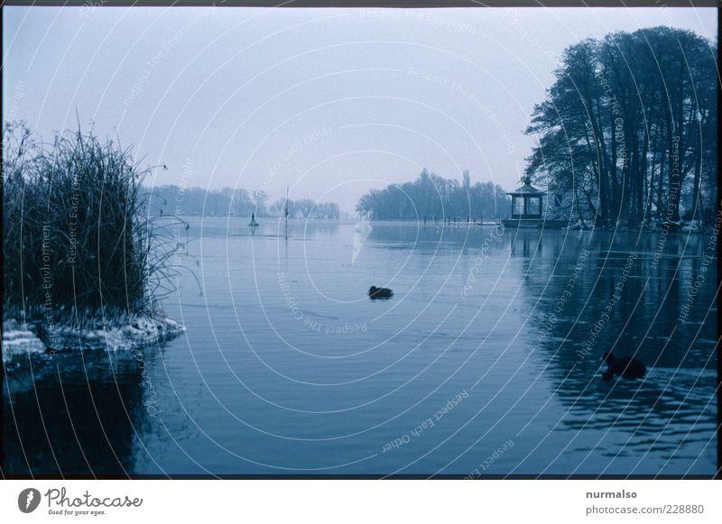 kalte Havel Natur Wasser Baum Pflanze Winter Tier Umwelt Landschaft Eis Vogel Nebel Schwimmen & Baden natürlich Wildtier trist