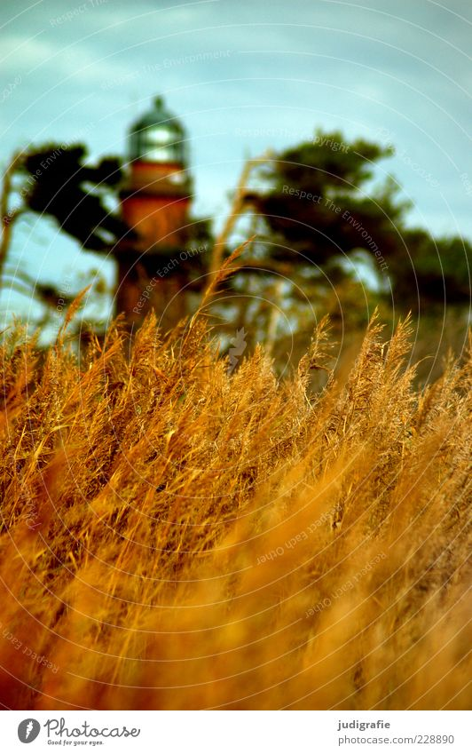Darßer Ort Umwelt Natur Landschaft Pflanze Himmel Sommer Klima Küste Ostsee Meer Leuchtturm Bauwerk Gebäude Sehenswürdigkeit natürlich Wärme Stimmung