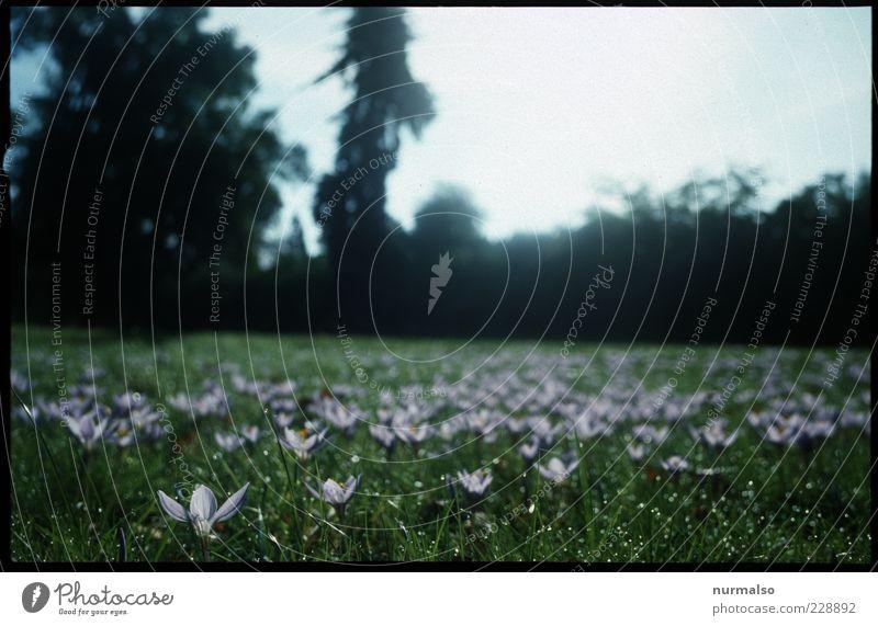 er kommt ganz bestimmt Lifestyle Garten Natur Landschaft Pflanze Tier Frühling Blume Gras Park Wiese Blühend ästhetisch Freundlichkeit natürlich schön Stimmung