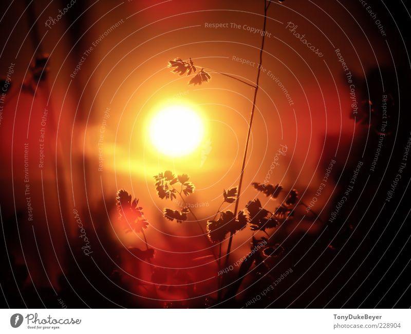 Sachsens Afrika Himmel Natur Pflanze rot Sonne Sommer Einsamkeit Erholung Wiese dunkel Umwelt Landschaft Gras Wärme Luft Feld