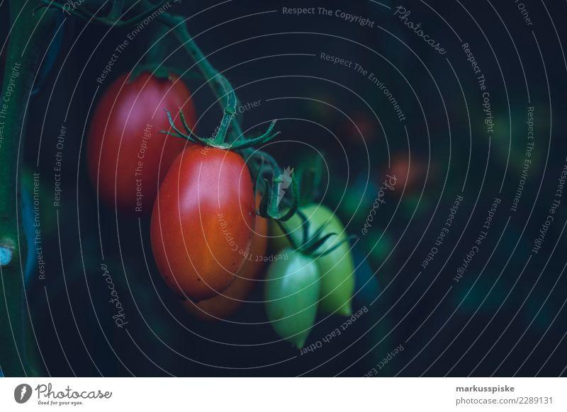 Tomaten Urban Gardening Natur Pflanze Gesunde Ernährung Freude Leben Lifestyle Umwelt Gesundheit Lebensmittel Garten Freizeit & Hobby Frucht Wachstum Sträucher