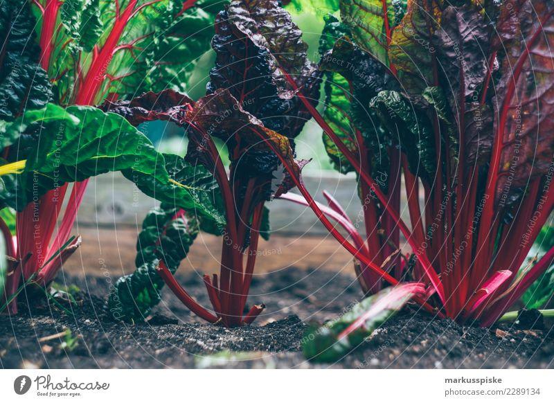 Mangold Urban Gardening Pflanze Gesunde Ernährung Freude Leben Lifestyle Lebensmittel Garten Freizeit & Hobby Frucht Wachstum authentisch Blühend