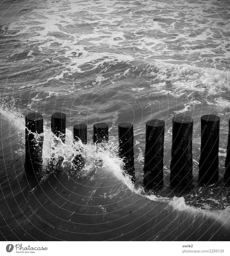 Wellenkamm Wasser Küste Ostsee Buhne Holzpfahl berühren Bewegung dunkel einfach fest Zusammensein maritim nass Verlässlichkeit geduldig Ausdauer standhaft