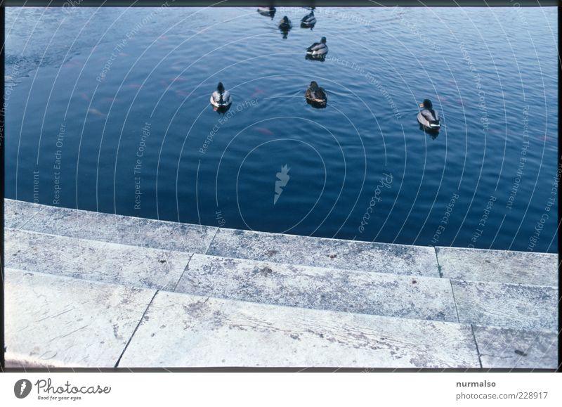 Enten im Brunnen Natur Wasser Schönes Wetter Teich Tier Vogel Tiergruppe ästhetisch trashig Stimmung Frieden Leben Vergänglichkeit Gedeckte Farben abstrakt