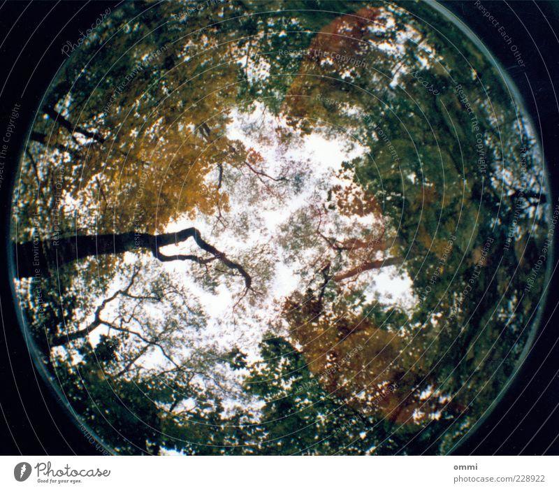 Ein Fisch im Wald Natur Himmel Baum Blatt Ferne groß hoch oben rund grün Baumkrone Geäst Ast Laubbaum Baumstamm Fischauge Lomografie analog Farbfoto