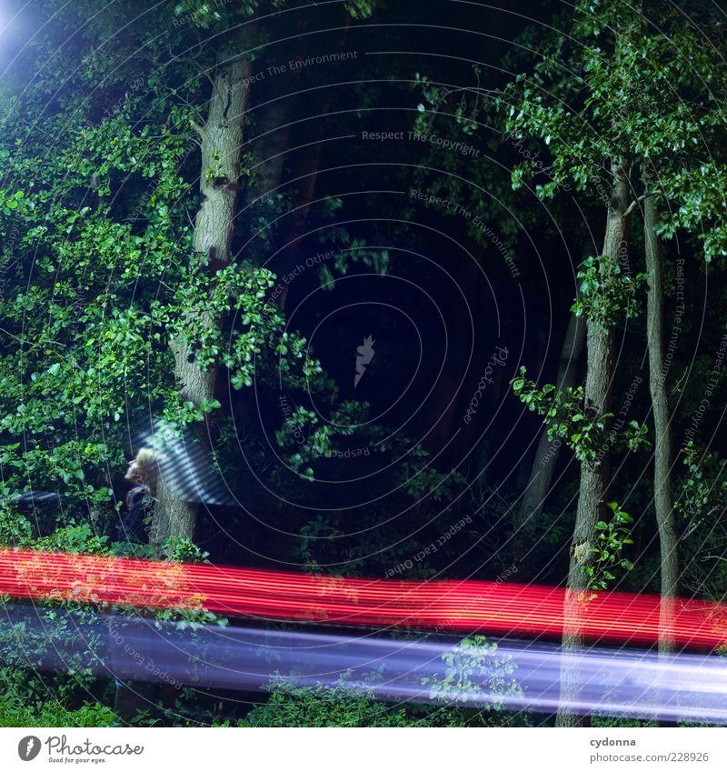 Nachtlichter Mensch Natur Baum Wald Leben Umwelt Freiheit Bewegung Wege & Pfade PKW Zeit Design ästhetisch Lifestyle Wandel & Veränderung einzigartig