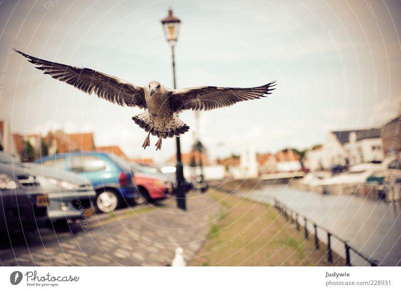 Tiefflieger Tier grau Wege & Pfade PKW Vogel Kraft fliegen natürlich Geschwindigkeit Flügel Macht Ziel Unendlichkeit entdecken Schönes Wetter Straßenbeleuchtung