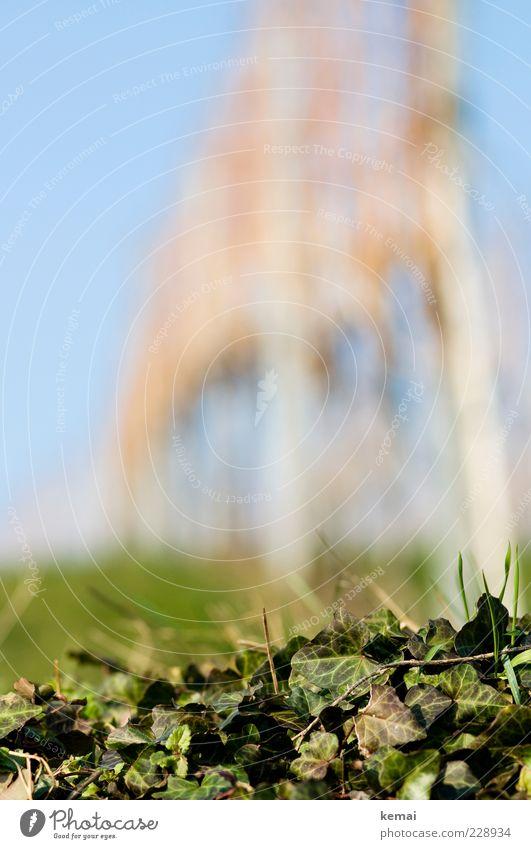 Efeu und Weinstöcke Umwelt Natur Pflanze Sonnenlicht Frühling Schönes Wetter Grünpflanze Nutzpflanze Wildpflanze Wachstum blau grün Farbfoto Außenaufnahme Tag