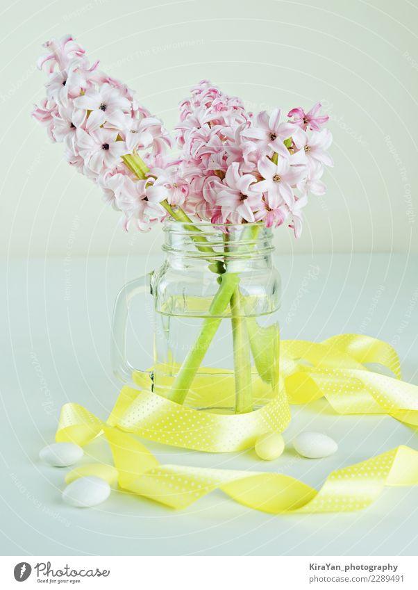 schön Wasser gelb Blüte Frühling Stil rosa Stimmung Dekoration & Verzierung frisch Glas Geburtstag Blühend Geschenk Ostern Blumenstrauß