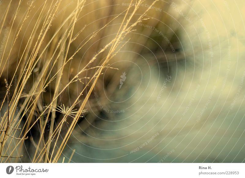 WinterGräser Natur Wasser Pflanze Umwelt Gras natürlich Sträucher