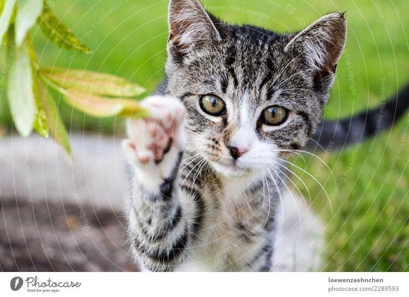 Hi! Katze Natur Pflanze Tier Blatt Freude Tierjunges Spielen Garten wild Fröhlichkeit Abenteuer Neugier entdecken Haustier Wachsamkeit