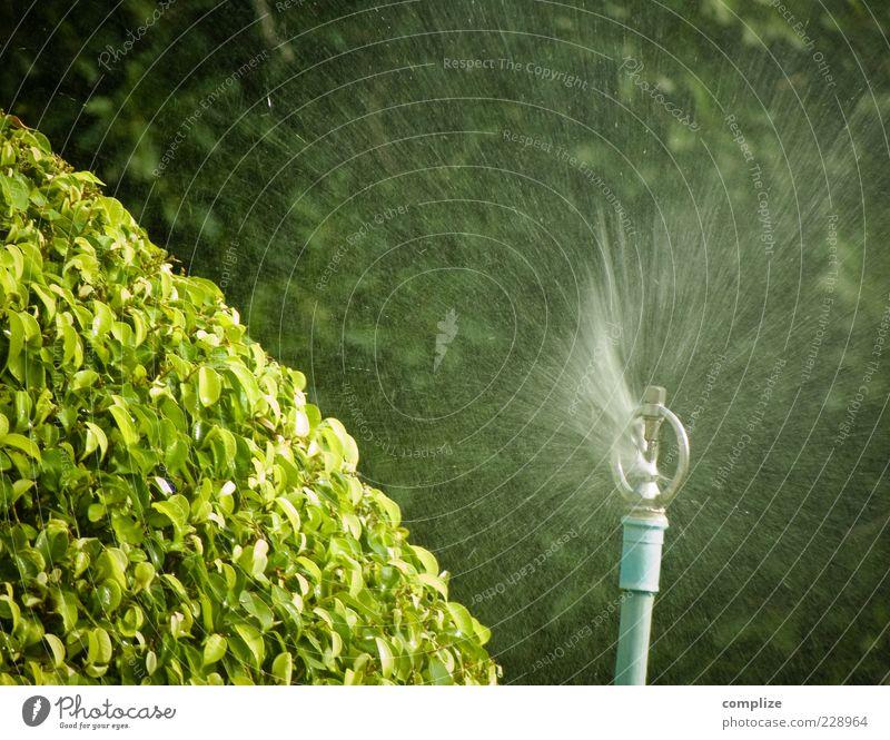 SPRITZIG ! Wasser grün Baum Pflanze frisch Wassertropfen Sträucher spritzen gießen Grünpflanze Gartenbau Verwirbelung Wasserstrahl sprengen Wasserspritzer