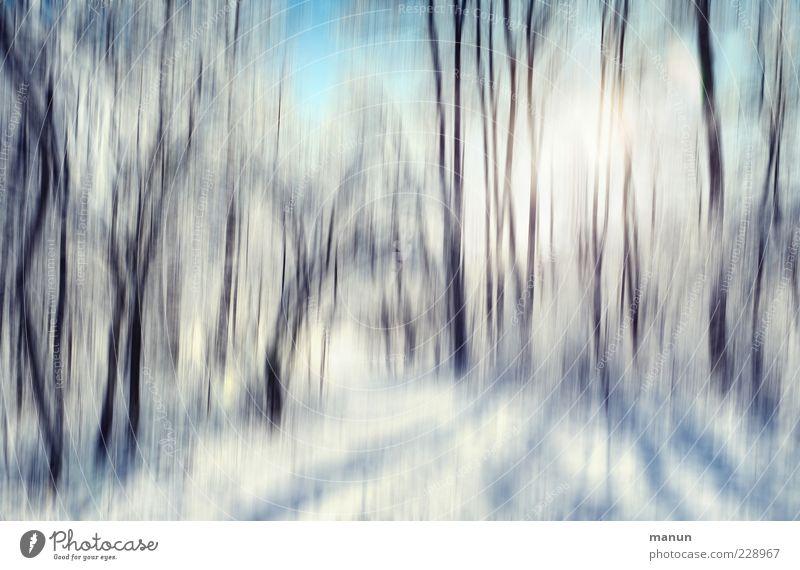 ein Wintertag Natur Landschaft Schönes Wetter Eis Frost Schnee Baum Wald außergewöhnlich Coolness kalt Farbfoto Außenaufnahme abstrakt Menschenleer Tag Licht