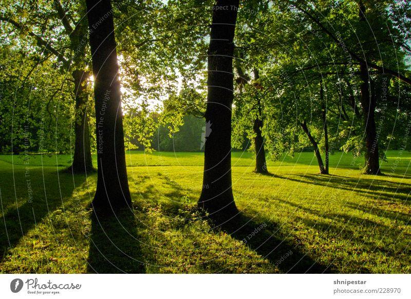 Waldmeister Wohlgefühl Erholung ruhig Sommer Sonne Umwelt Natur Landschaft Pflanze Frühling Klima Wetter Schönes Wetter Baum Gras Sträucher Park Wiese Leipzig