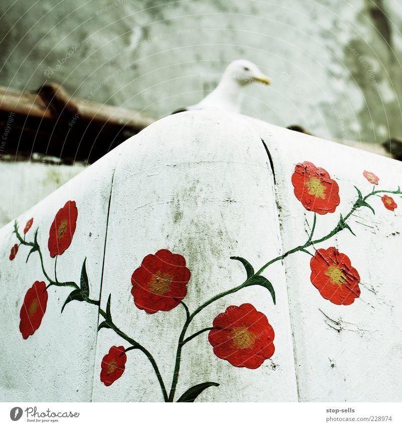 Warten im Garten Pflanze Tier Wildtier 1 fliegen sitzen Spielen Straßenkunst Möwe Gemälde Kunstwerk verstecken Kopf warten rot Graffiti Farbfoto