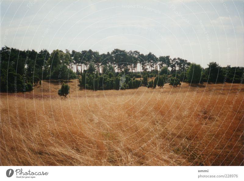 NEG.NR.< 7A > 09.99 F-C-P/F Himmel Natur grün Baum Sommer Landschaft Gras braun Feld Sträucher trocken Schönes Wetter Halm Grasland