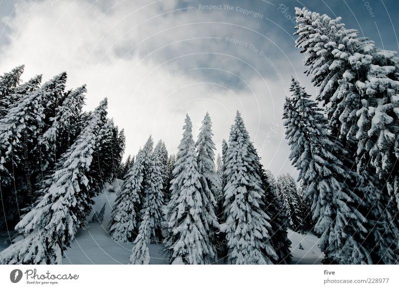 waldrand Natur Landschaft Himmel Wolken Winter Schönes Wetter Eis Frost Schnee Pflanze Baum Tanne Wald Hügel Alpen Berge u. Gebirge kalt Farbfoto Außenaufnahme