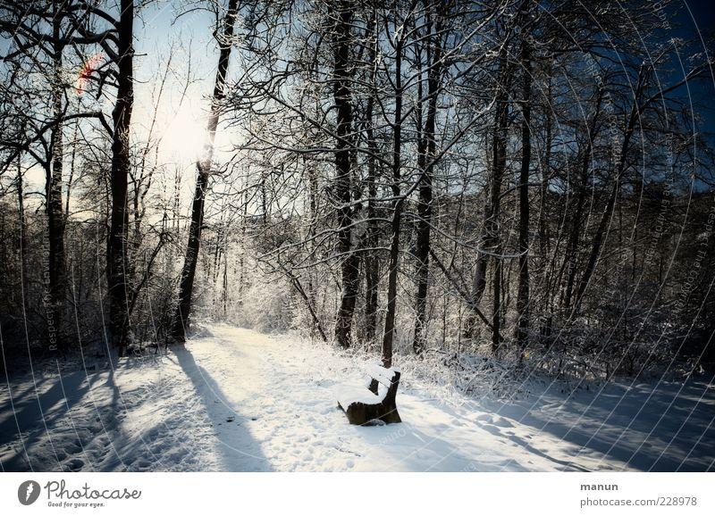 Scheinwerfer Natur Winter Schönes Wetter Eis Frost Schnee Baum Wald Bank Holzbank einfach kalt ruhig Einsamkeit Idylle stagnierend Sitzgelegenheit Mittelpunkt