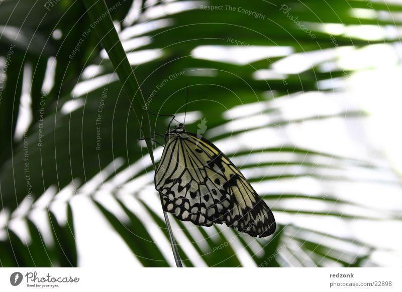 Schmetterling gepunktet Blatt Palme ruhig Erholung Natur Makroaufnahme Nahaufnahme Detailaufnahme frei