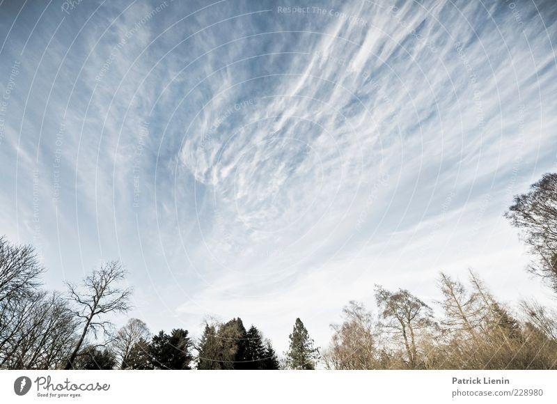 God is an astronaut Himmel Natur blau weiß schön Baum Pflanze Wolken Wald Umwelt Landschaft kalt Luft Horizont Wetter Wind