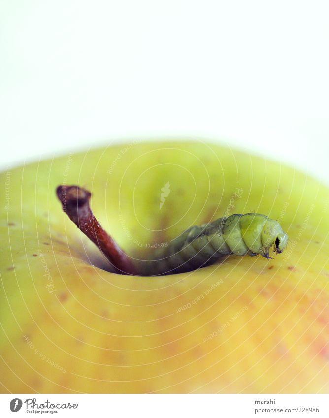 da ist der Wurm drinnen grün Tier Frucht Ernährung Lebensmittel Apfel Appetit & Hunger Stengel Bioprodukte Fressen Ekel Raupe Schädlinge Nahrungssuche Pflanze