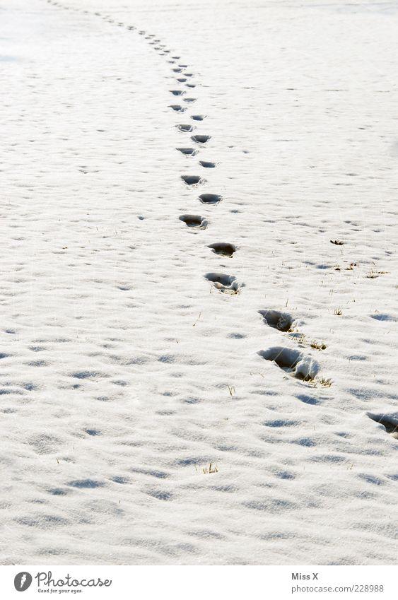 Spuren im Schnee Natur weiß Winter Wiese kalt Bewegung Wetter Eis Feld Frost Unendlichkeit Fußspur Schneedecke Schneespur