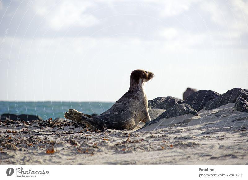 Fernweh? ... Umwelt Natur Tier Urelemente Erde Sand Wasser Himmel Wolken Winter Schönes Wetter Küste Strand Nordsee Meer Insel Wildtier Fell 1 hell natürlich