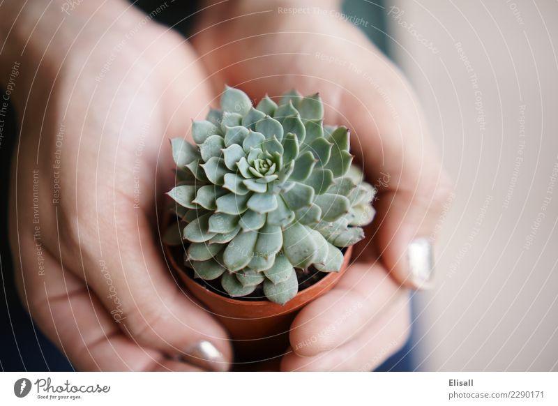 Natur Pflanze grün Hand ruhig Lifestyle Frühling natürlich Freizeit & Hobby Wachstum Gartenarbeit Sukkulenten Bodenbearbeitung
