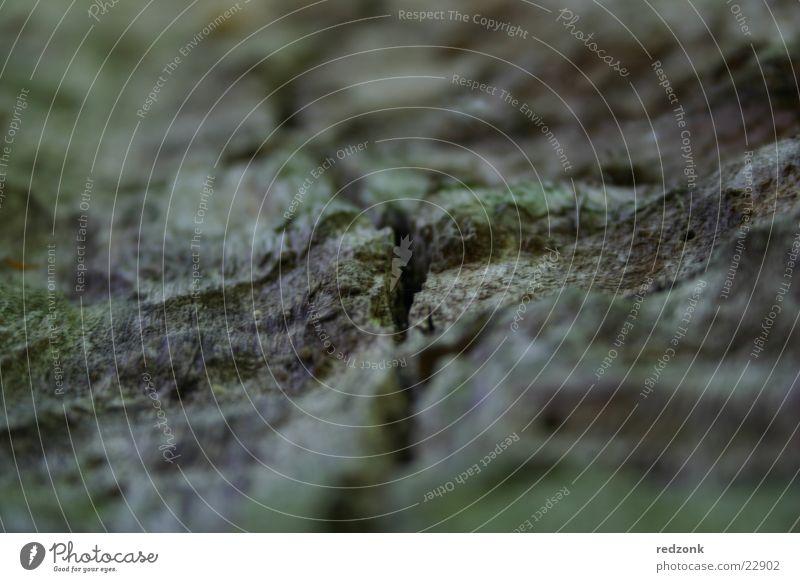 Baumstruktur Natur grau braun Riss Am Rand seltsam Oberfläche Spalte Baumrinde