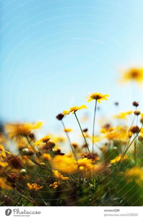 Yellow Sunshine. Natur Pflanze Sommer Blume ruhig Umwelt gelb Wiese Frühling Blüte Zufriedenheit ästhetisch Schönes Wetter Blühend Stengel Blauer Himmel