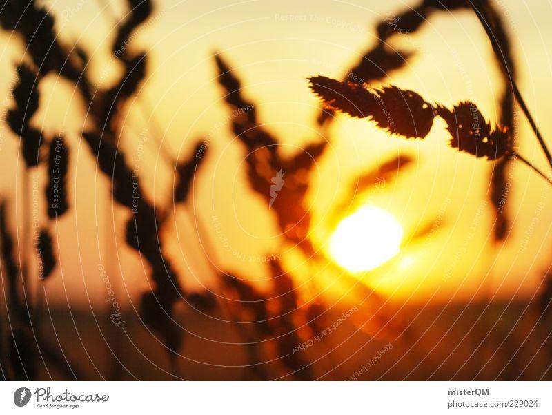 Hello Sunshine. Umwelt Natur ästhetisch Zufriedenheit Sonne Wärme Ende Traurigkeit Momentaufnahme Getreide Hoffnung Zukunft Unschärfe Sommer Sommerabend erhaben