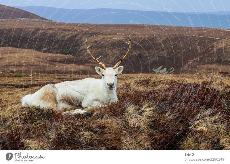 Natur Ferien & Urlaub & Reisen Landschaft weiß Tier Freude Winter Berge u. Gebirge Wärme Glück wandern liegen gold Wildtier Abenteuer Weihnachtsmann