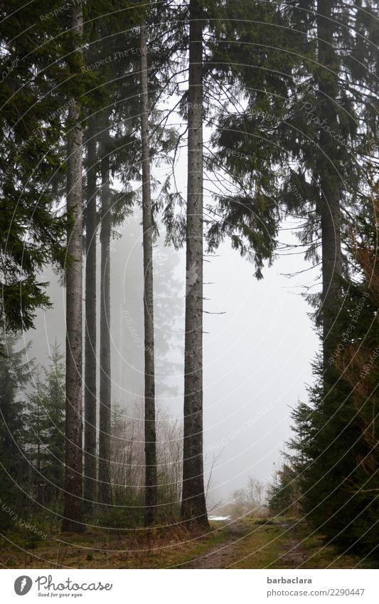 Winterausklang im Schwarzwald wandern Landschaft Urelemente Klima Nebel Schnee Baum Wald Wege & Pfade hoch kalt Stimmung Erholung Freizeit & Hobby Natur Umwelt