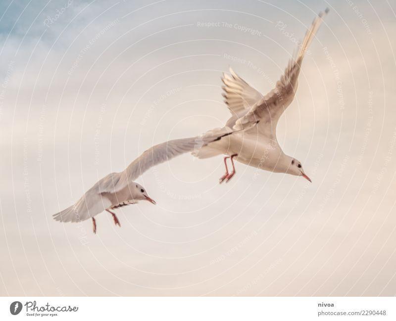 Möwen im Vorbeiflug Himmel Natur weiß Erholung Tier Wolken ruhig Umwelt Gefühle Küste Glück Vogel Zusammensein fliegen Zufriedenheit Luft