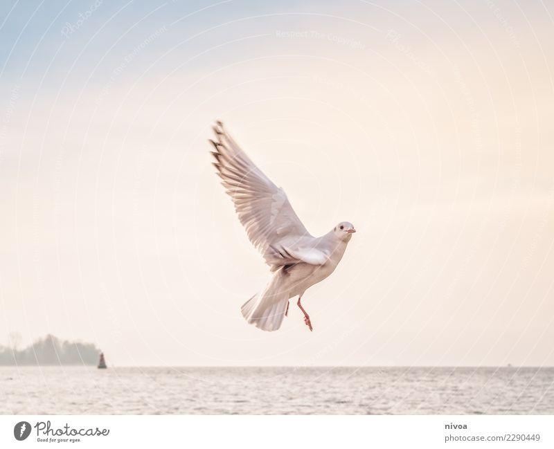 Guck mal Himmel Natur Landschaft weiß Meer Tier Leben Umwelt Herbst Gesundheit Gefühle Küste Vogel Stimmung fliegen Wetter