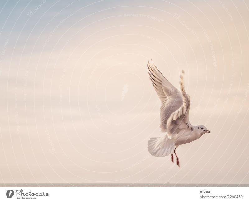 möwe voraus Himmel Natur Landschaft weiß Meer Tier ruhig Umwelt Herbst Gefühle Küste Vogel Stimmung fliegen hell Wetter