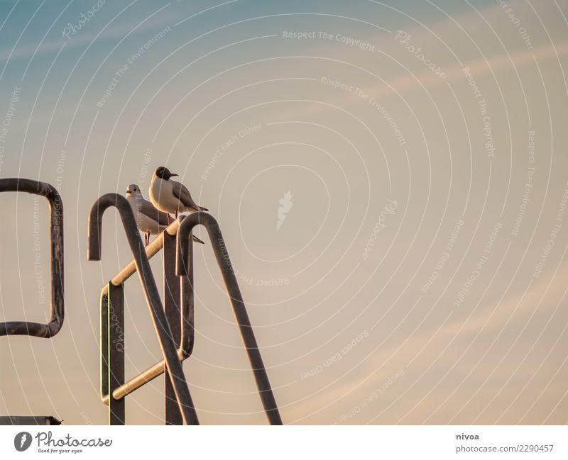 Vogelstange Natur Landschaft Tier ruhig Leben Umwelt Gefühle Bewegung Stimmung fliegen frei Wetter sitzen Fröhlichkeit Schönes Wetter