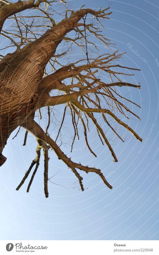 thou shalt not mutilate Baum Baumstamm Baumrinde Ast Himmel blau kahl Winter Baumkrone beschnitten kürzen Hochformat Textfreiraum unten Menschenleer