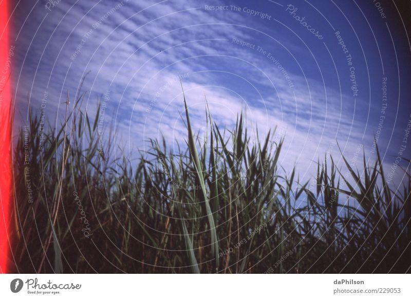 Sky Umwelt Natur Landschaft Pflanze Himmel Wolken Sommer Schönes Wetter Gras Sträucher Wildpflanze ruhig Farbfoto Lomografie Menschenleer Textfreiraum links