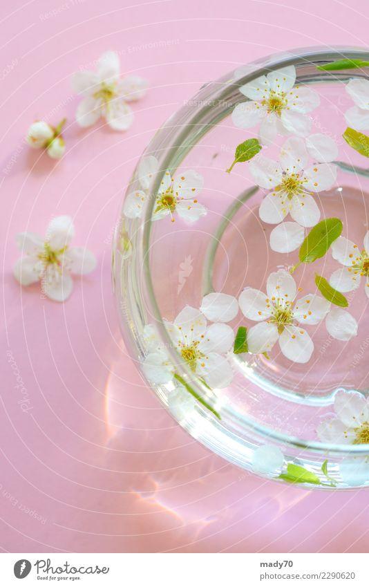 Natur Ferien & Urlaub & Reisen Pflanze Sommer weiß Blume Erholung gelb Blüte natürlich rosa frisch Finger Fotografie Sauberkeit Ostern