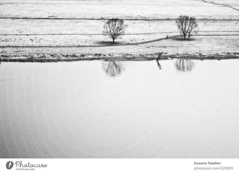 zusammen. Winter Baum einzigartig Wege & Pfade Elbe Elbufer Fluss Flussufer Schnee kalt Reflexion & Spiegelung Schwarzweißfoto Außenaufnahme Detailaufnahme