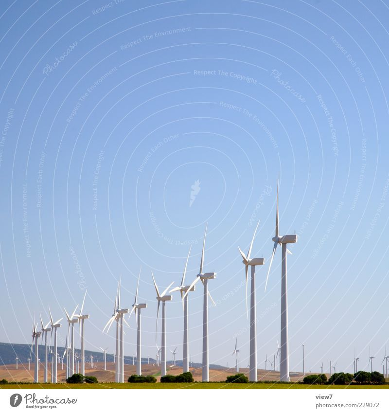 WindWorld Natur Pflanze Sommer Umwelt Landschaft hoch Energie Energiewirtschaft authentisch Technik & Technologie viele Windkraftanlage Schönes Wetter